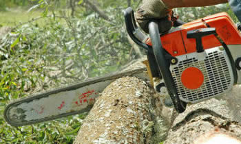 Tree Removal in Memphis TN Tree Removal Quotes in Memphis TN Tree Removal Estimates in Memphis TN Tree Removal Services in Memphis TN Tree Removal Professionals in Memphis TN Tree Services in Memphis TN