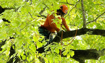 Tree Trimming in Memphis TN Tree Trimming Services in Memphis TN Tree Trimming Professionals in Memphis TN Tree Services in Memphis TN Tree Trimming Estimates in Memphis TN Tree Trimming Quotes in Memphis TN