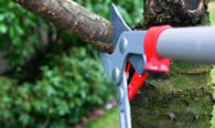 Tree Pruning Services in Memphis TN