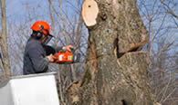 Tree Removal in Memphis TN